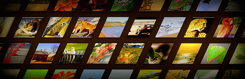 WordPress Awesome Flickr Gallery Plugin Banner Image